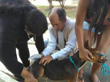 Bambuí conclui vacinação antirrábica na Zona Rural