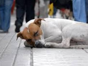 Esclarecimento sobre castração de cães e gatos em Bambuí