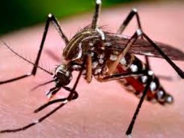 Bambuí está com risco de infestação de Dengue