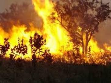 Prefeitura pede o fim das queimadas para evitar uma Amazônia em chamas