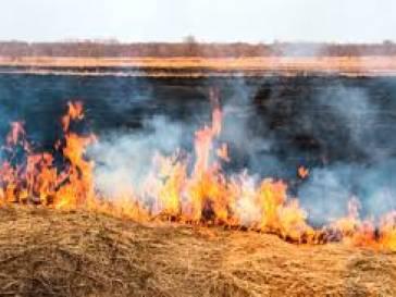 Não coloque fogo e nem faça queimadas