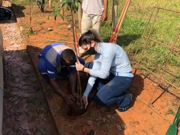 Bambuí ganha novas árvores